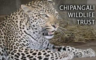 dzs-conservation--mammals-ChipangaliWildlifeTrust