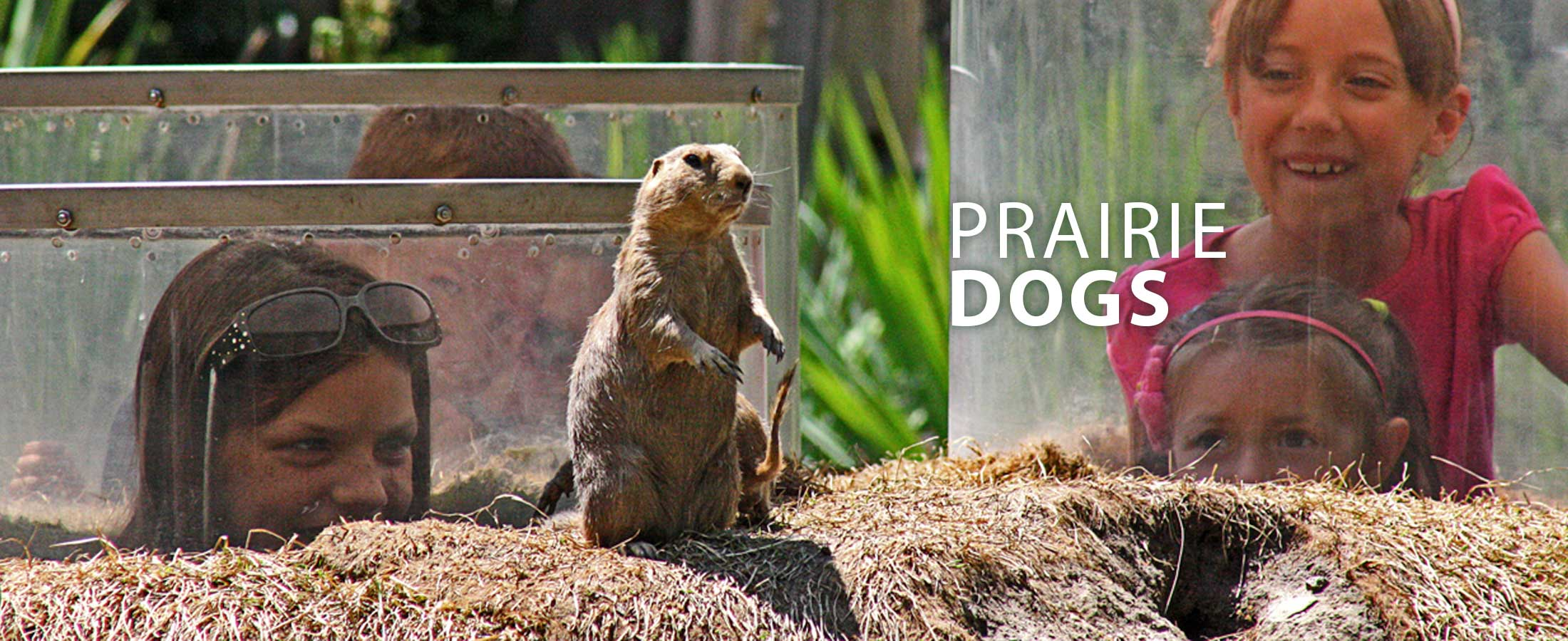 PrairieDogs